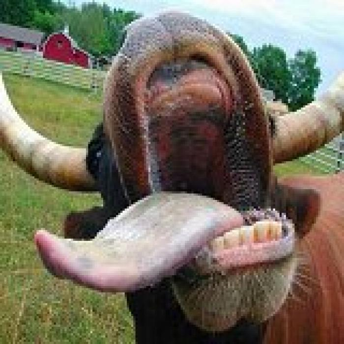 F7s-animal-mouth.jpg