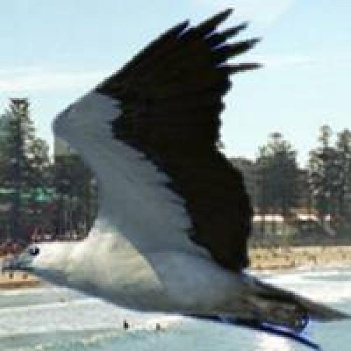 NRL_Eaglesalt-manlyseaeagles-04.jpg